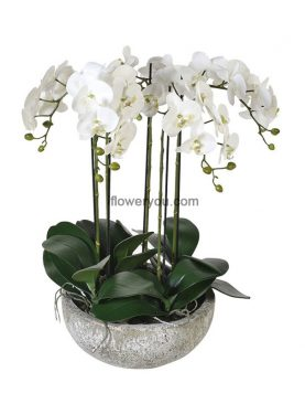 Deep Sensation Orchids Arrangement