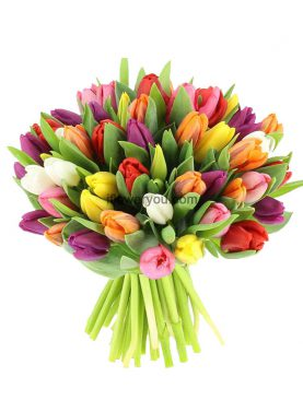 Bouquet of 50 multi-color tulips