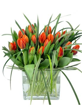 24 Orange Tulip Tigers