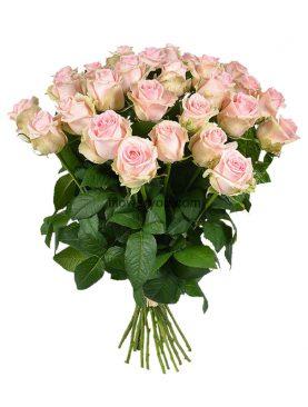 25 Pastel Roses