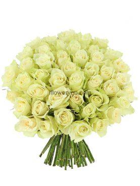 50 Elegant White Roses