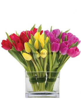 Trio Tender Tulips