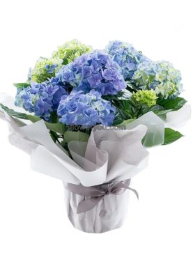Hydrangea Plants Blue - Mother's Day Lebanon