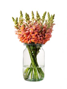 Honey Snapdragon Bouquet